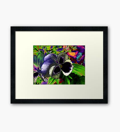 Pansies in disguise.. Framed Print