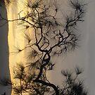 gerroa sunset by Rosalinde Jewell