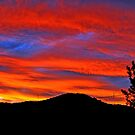 Sunset At Allambie. Brisbane, Queensland, Australia. by Ralph de Zilva