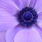 Blue Anemone by Lena Weiss