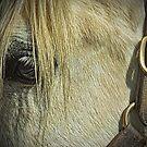 Horse head by john forrant