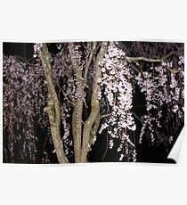 Pink Blossoms Cascading In The Night Poster