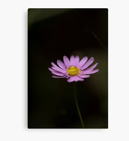 Daisy Drinking Canvas Print