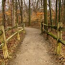 A Trail at Blacklick in March by bicyclegirl