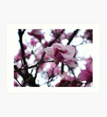The Breathtaking Beauty of Spring Art Print