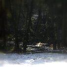 snowy Oregon forest 12 by Dawna Morton