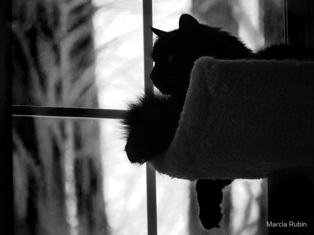 Kitty in the Window by Marcia Rubin