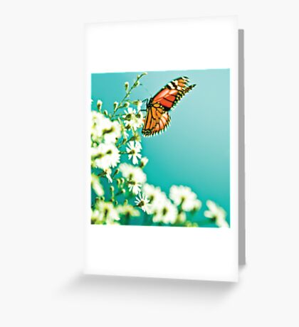 Butterfly and flowers - Nature Greeting Card