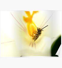 First Taste of Pollen Poster
