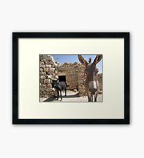 Goldilocks in the Middle East Framed Print