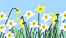 Daffodils by Nigel Silcock