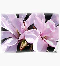 March Magnolias Poster