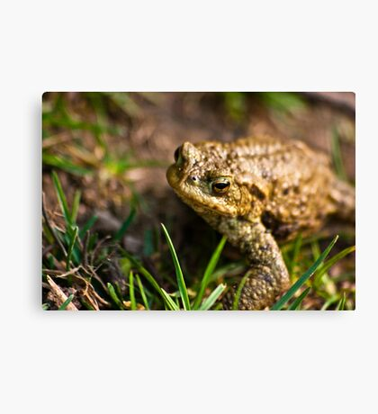 Toad of Toad Hall Canvas Print