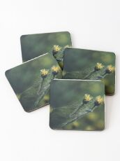 Entwined Together Coasters