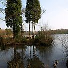 Two trees and two ducks by moor2sea