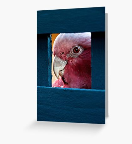 """""""I Can See You Now"""" Greeting Card"""