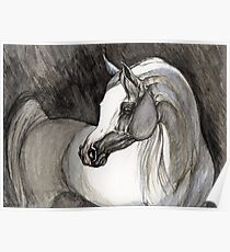 grey arabian horse painting Poster