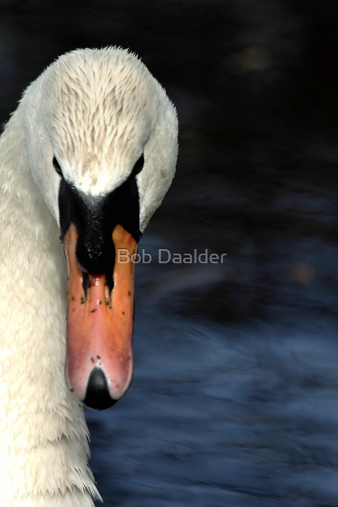 Looking at you... only you... by Bob Daalder