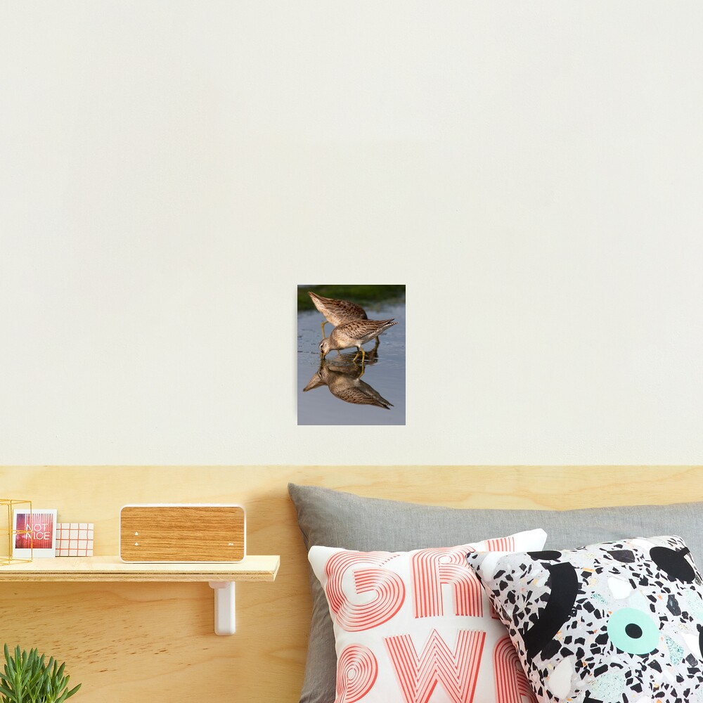 Dowitcher Reflections Photographic Print