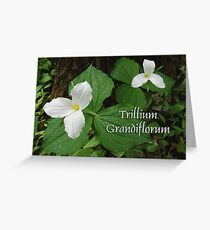 Trillium Grandiflorum ~ Greeting Card Image Greeting Card