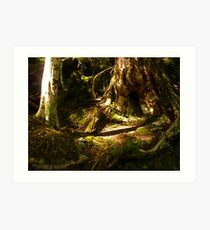 Archaic Beech Forest - Routeburn Track, Fiordland and Mount Aspiring National Parks.  Art Print