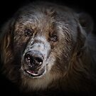The Kodiak Bear by Natalie Manuel