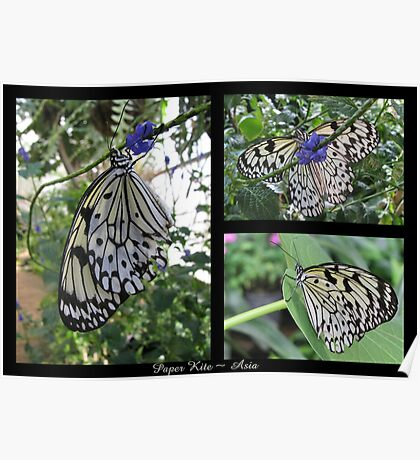 Butterfly (Asia) ~ Paper Kite Poster