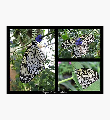 Butterfly (Asia) ~ Paper Kite Photographic Print