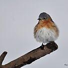 Bluebird in the Snow by Nancy Barrett