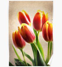 Tulip Aglow Poster