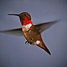 Hummingbird by Sue Ratcliffe