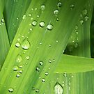 «sprinkled greens» de serpentwhisper