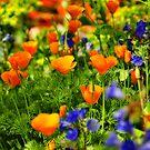 Arizona Wildflowers by Saija  Lehtonen