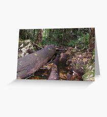 Boundary Creek Falls, Washpool National Park. Greeting Card