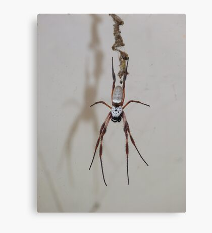 Welcome from the Orb Weaver Canvas Print