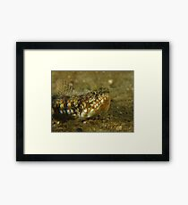 Fly Point Lizardfish Framed Print