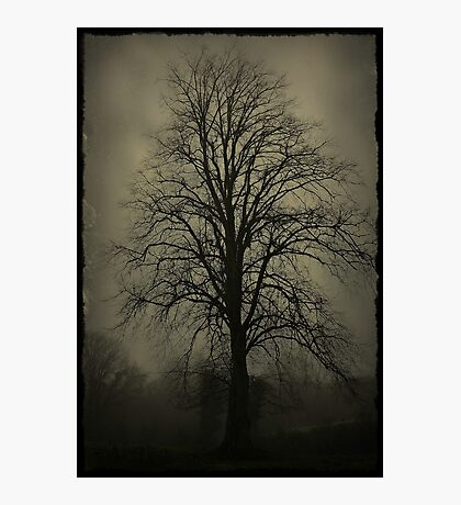 Foggy Morn' Photographic Print