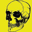 Skull by jollification