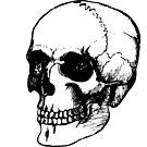 Skull 2 by jollification