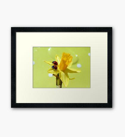Sunny ladies Framed Print