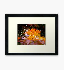 Front yard tree-1  ^ Framed Print