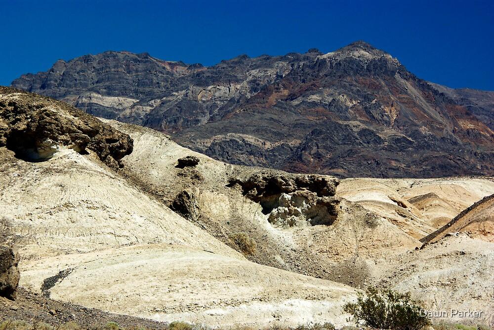 Desert Contrast by Dawn Parker