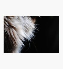 Fur Photographic Print