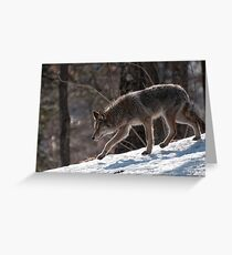 Silent Runner Greeting Card