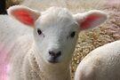 wee lamb by Kyoko Beaumont