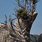 Life from the rocks by Alessandra Antonini
