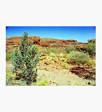 Kings Canyon Foliage Photographic Print