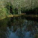 Trees mirrored in glassy lake by moor2sea