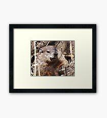 Woodchuck Framed Print