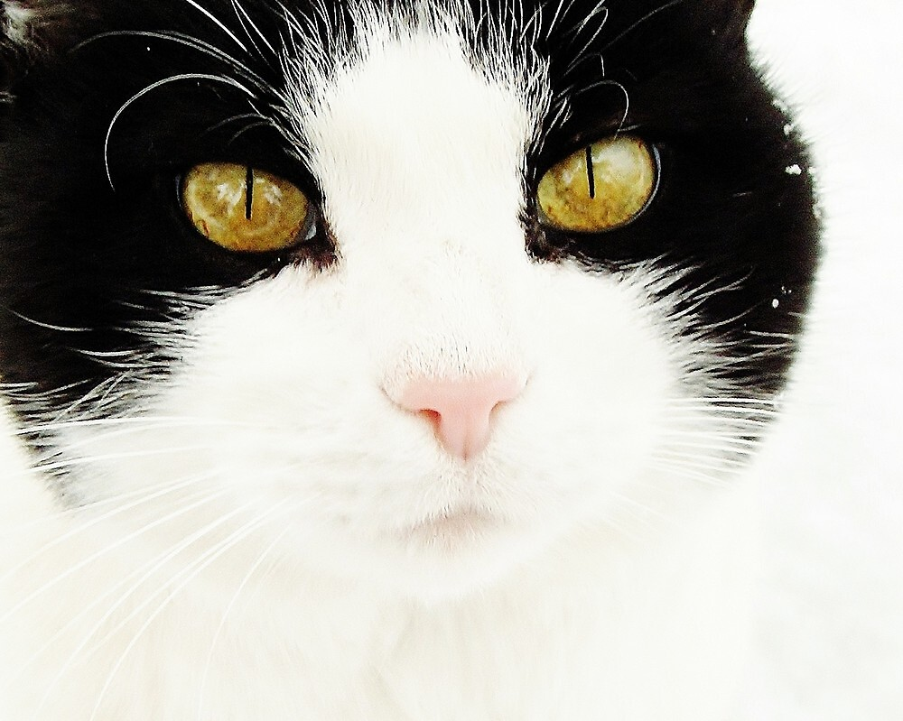 Green Eyed Cat by Kathilee